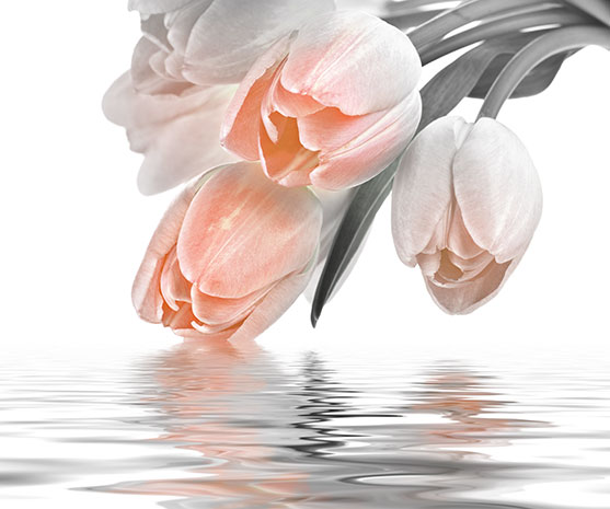 http://modabania.com/clients/220/images/catalog/products/a1fe595a7379a724_074-TULIP--LOVE---SALMON.jpg